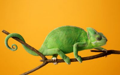 What Is A Modern Day Sales Chameleon