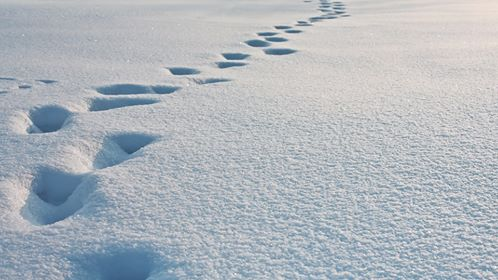 How Quickly Should You Follow Up On Sales Leads?